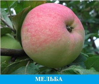 Мельба
